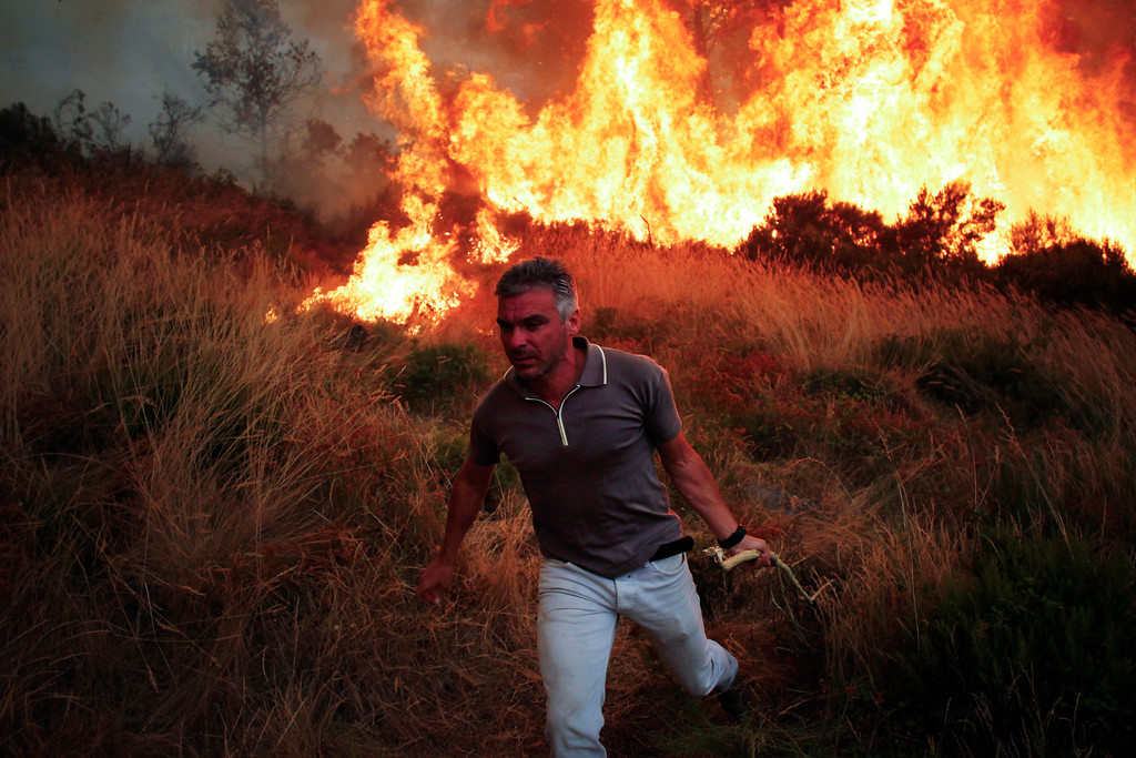 . An inhabitant, holding a branch of a tree, steps back while he helps to extinguish a wildfire near Caramulo, north Portugal, Thursday, Aug. 29, 2013. Portuguese officials said a woman firefighter died in a forest blaze, becoming the fifth fatality among emergency crews in a month as summer wildfires scorch large areas of parched countryside. (AP Photo/Francisco Seco)