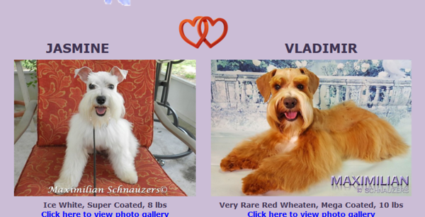 Jasmine & Vladimir Puppies, DOB 1/27/2018