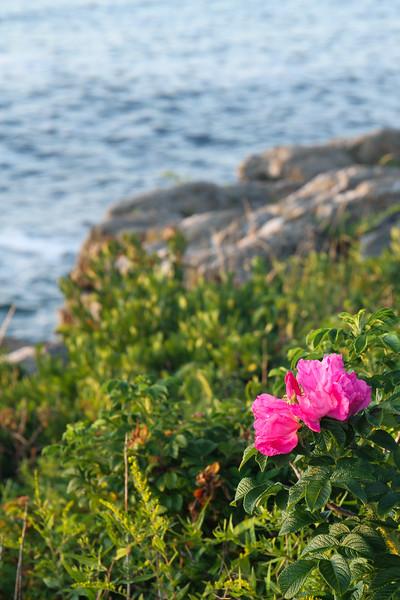 bailey_island_2019-138-LR.jpg