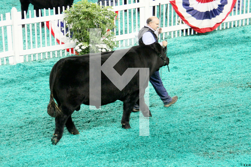 NAILE-Cattle 11-14-12