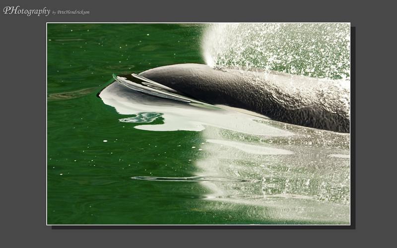 My Alaska 12-08-117.jpg