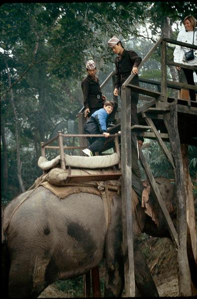 skyway for elephant boarding