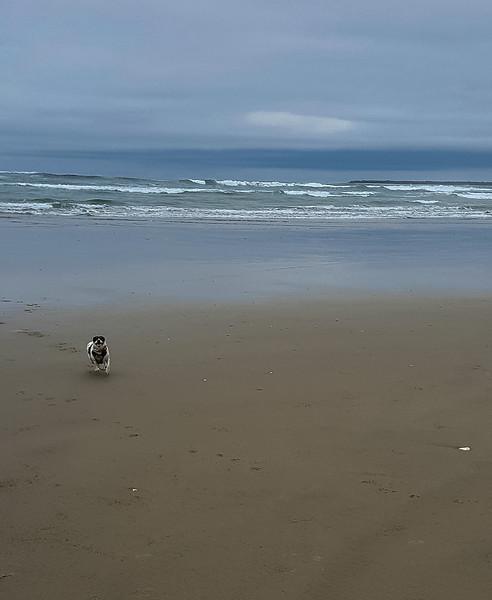 Beach walk with Mattie (16 of 20).jpg