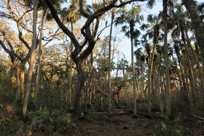 Kratzert Tract (Lake Monroe WMA), Volusia County (12-31-17)