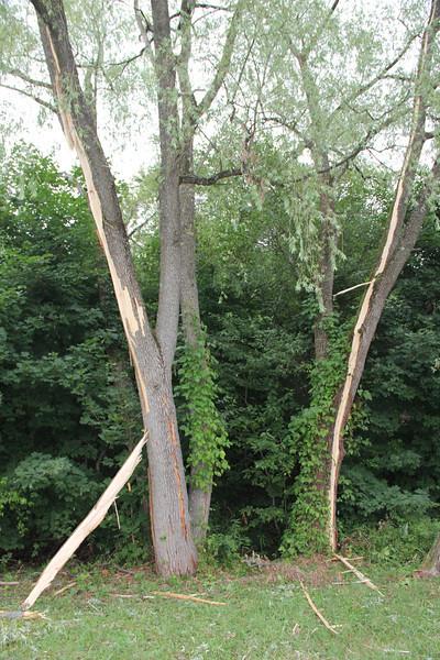 Lightning Strikes Tree, Dutch Hill, Tamaqua (7-18-2012)