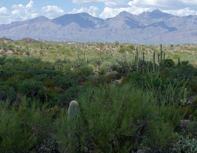 20180902-Saguaro-NP-East-4267.jpg