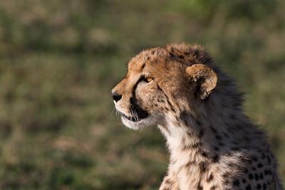 Serengeti 02 2013