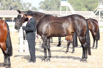 STANDARDBRED STATE CHAMPS 09 covered in April Horse Down Under Magazine