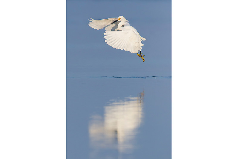Flapping Reflection
