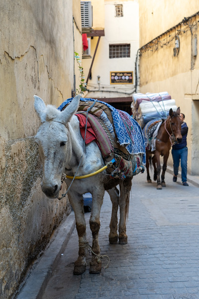 Donkeys in Fes, Morocco