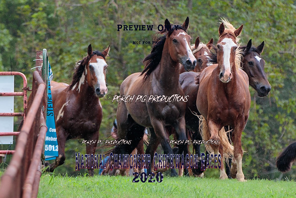 National Championship Chuckwagon Races 2020 Bucking Horse Futurity