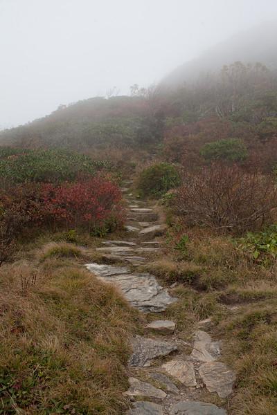 Pathway 2.jpg