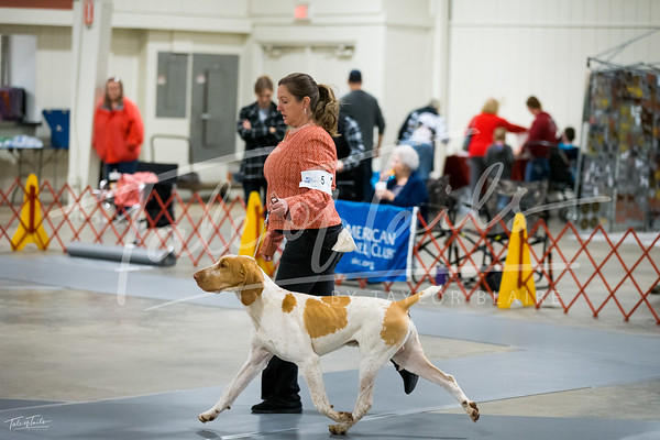 Charleston Kennel Club - Jan 25 & 26, 2020