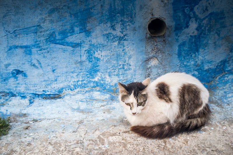 Street cat in the Kasbah. The Kasbah of the Udayas is a kasbah in Rabat, Morocco at the mouth of the Bou Regreg river opposite Salé. It was built during the reign of the Almohads (AD 1121-1269). It was granted World Heritage Status in 2012. in the Kasbah. The Kasbah of the Udayas is a kasbah in Rabat, Morocco at the mouth of the Bou Regreg river opposite Salé. It was built during the reign of the Almohads (AD 1121-1269). It was granted World Heritage Status in 2012.