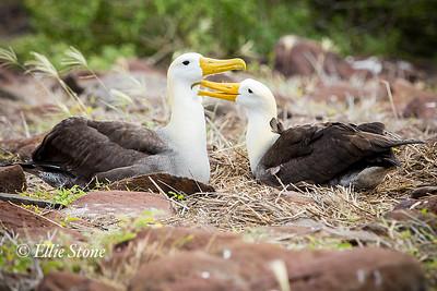 Galapagos Archipelago