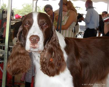 Field Trial Dog