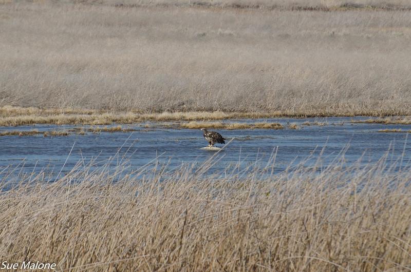 03-05-2020 Lower Klamath NWR-22.jpg
