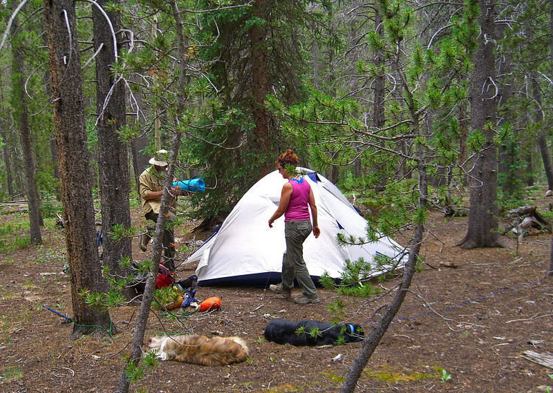 """Campsite at Wigwam Park (Wigwam Trail).  This is the """"Clubhouse"""" tent. Note two tired doggies!"""