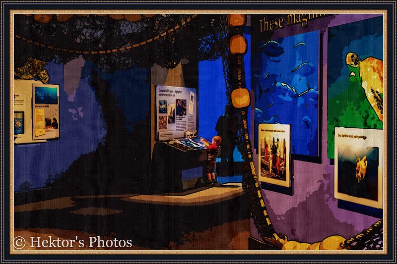 acquarium-10.jpg