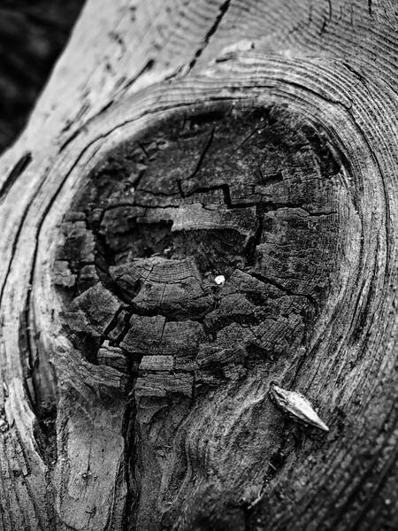 Nijole Shuberg Photography-3.jpg