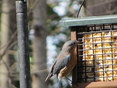 Birds-Nature-Durham