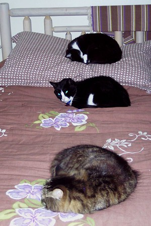 Our cats sleeping.....