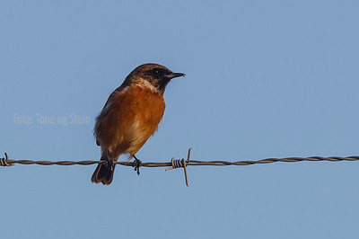 Birds Southern Europa