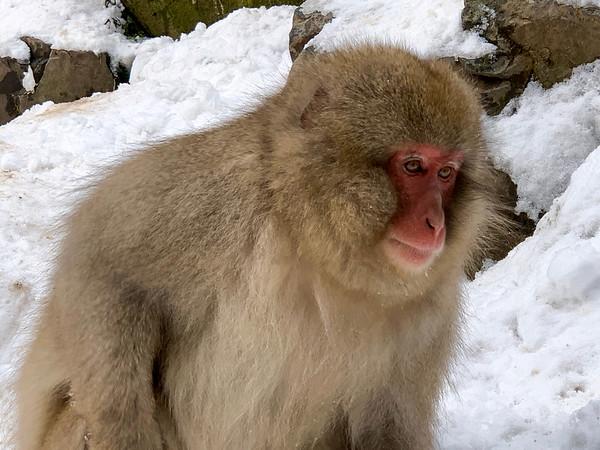 Jigokudani Snow Monkey Park, Japan