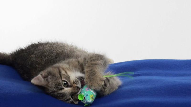 kitten_056_01.mov