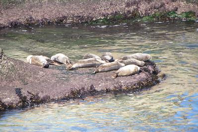 11-21 La Jolla seal cove