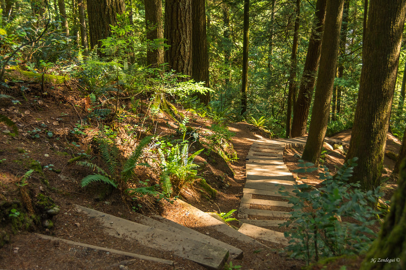 North Vancouver Trail