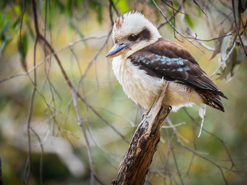 011319 bird  .JPG