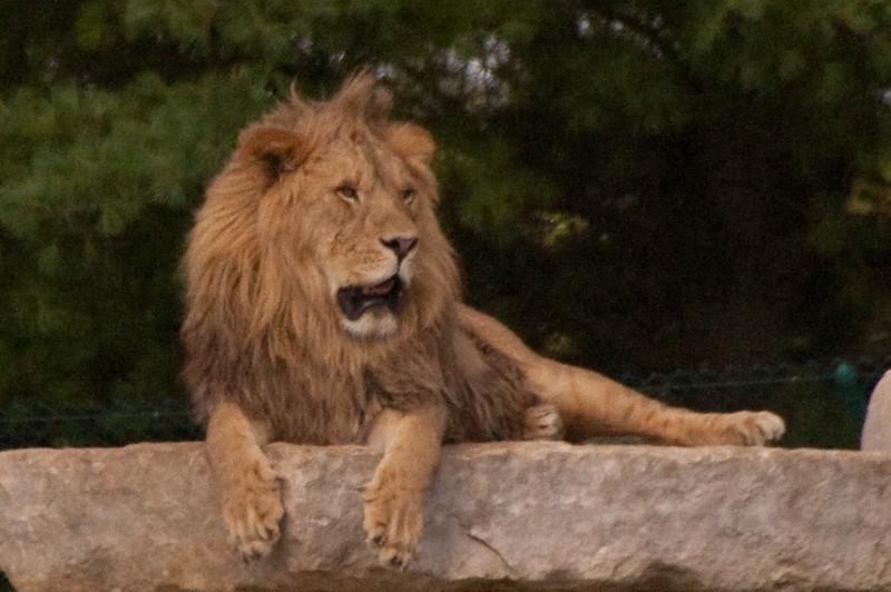 Carabana african safari Park8-09-8.jpg