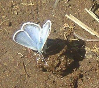2004-07-25 158crop.jpg