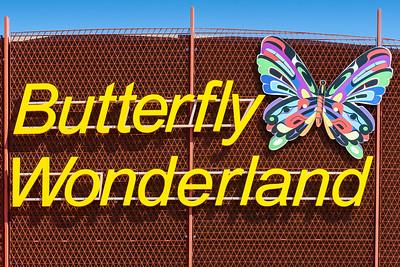 Butterflies, Dragonflies, etc