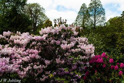 Blagdon Gardens - Open Day