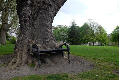 Dublin's Hungry tree