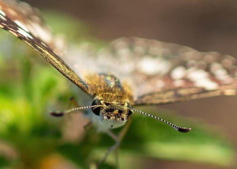 #6 Butterfly closeup