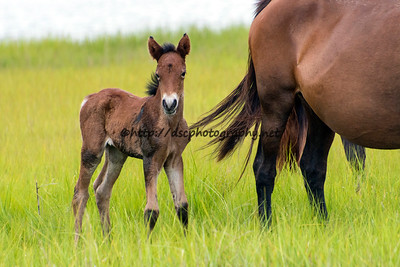 Leah's Bayside Angel's Filly