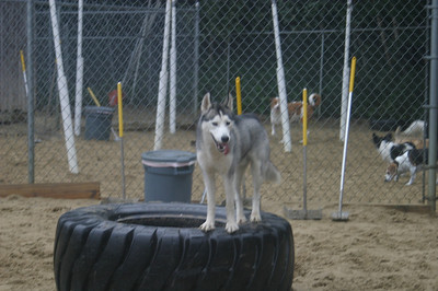 All Dogs Gym 9-22-2011