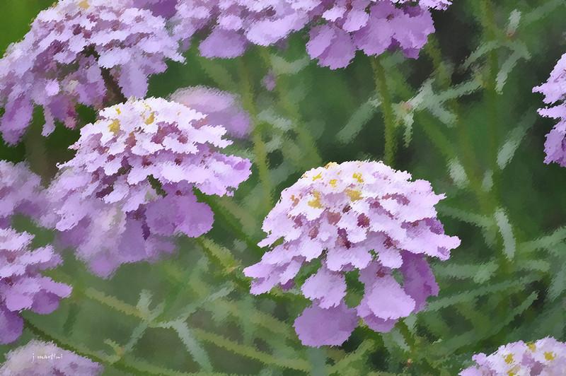 dream gardens 9 2-5-2011.jpg