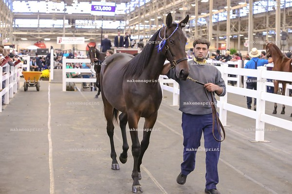 Hoosier Classic Select Yearling Sale 2019
