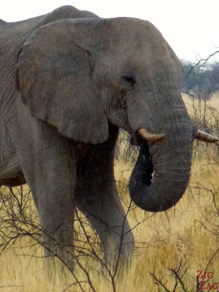 Spotting elephant in Etosha National Park, Namibia 5