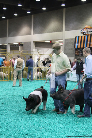 2012 NAILE - Pigs Crossbreds & Grand drive