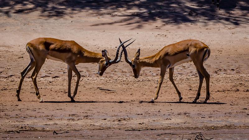 Kenya-0216.jpg