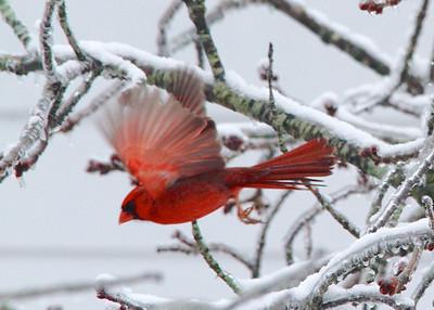 Snowjam 2.0 Birds and Snow