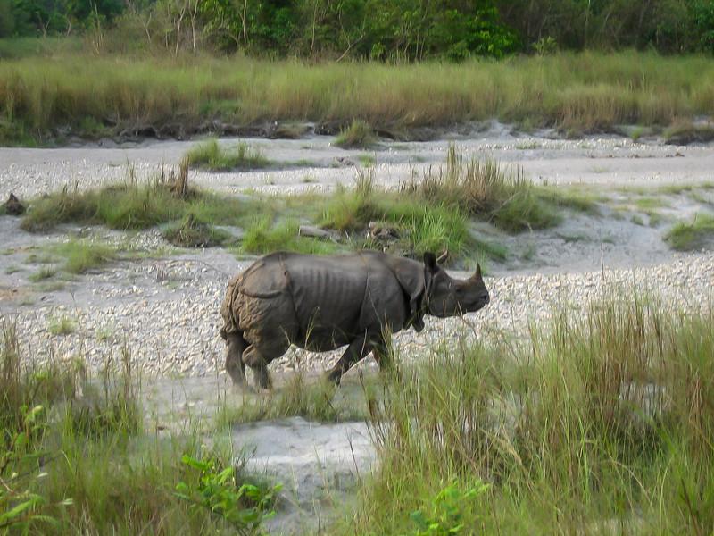 Chitwan 043.jpg