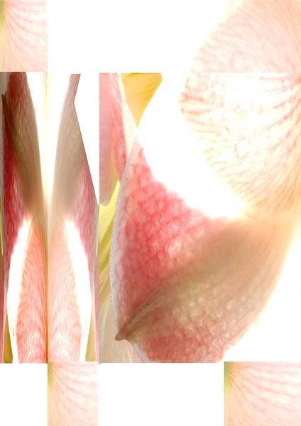 2013-05-04-Flores-63x88-A.jpg