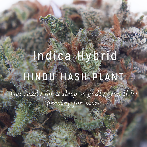 Hindu-Hash-Plant.jpg