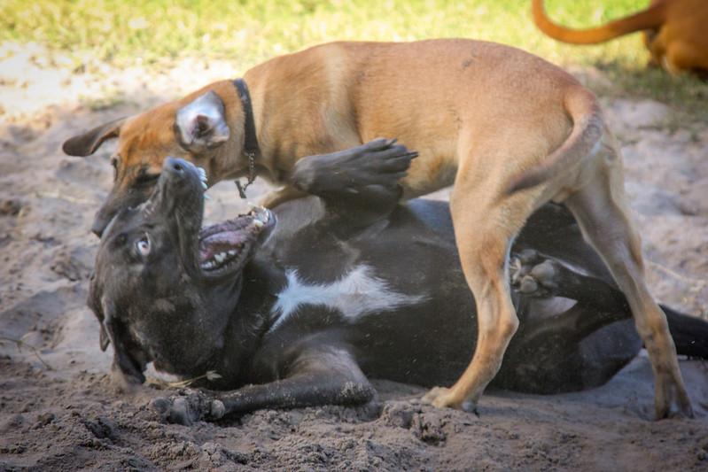 DogPark110313-3405